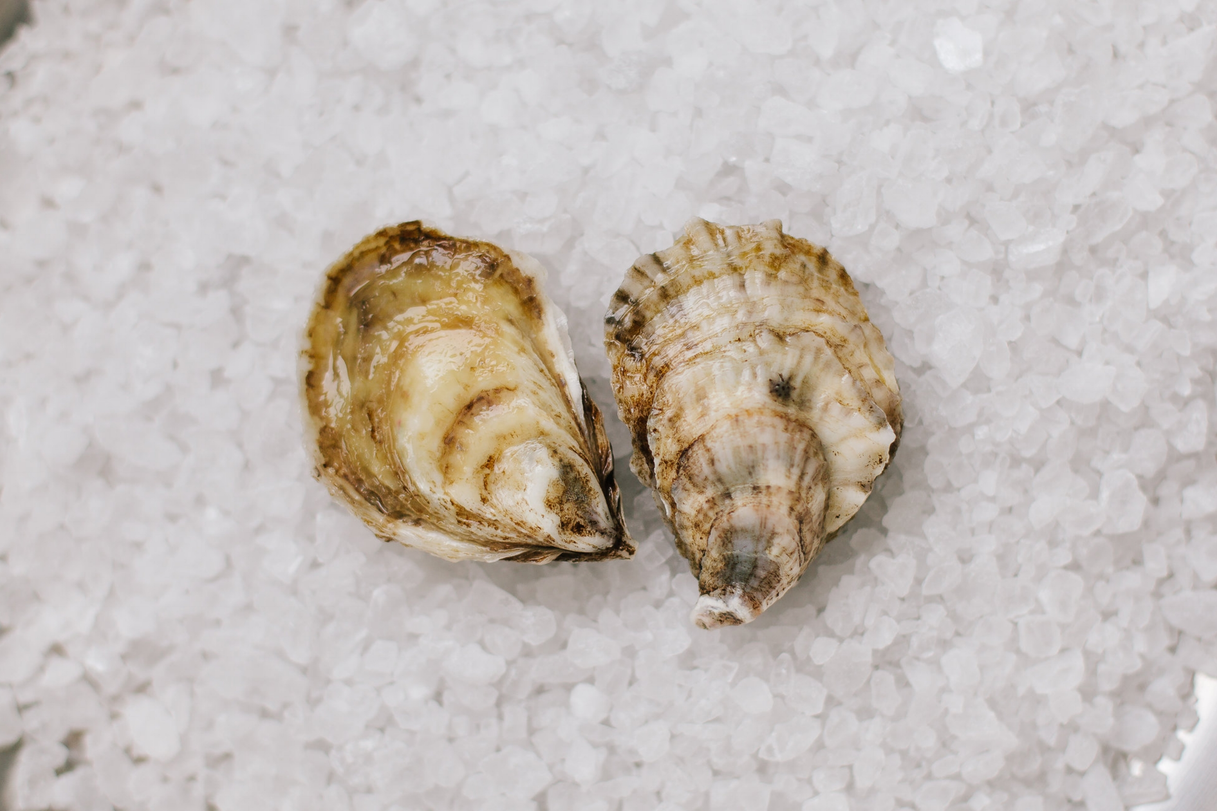 Beausoleil - Origin: New Brunswick, CanadaFlavor Profile: Light, refined briny meat that sits in a petite shell. Great for the novice oyster eater.