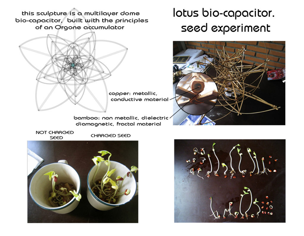 lotus-bio-capacitor-seed-experiment