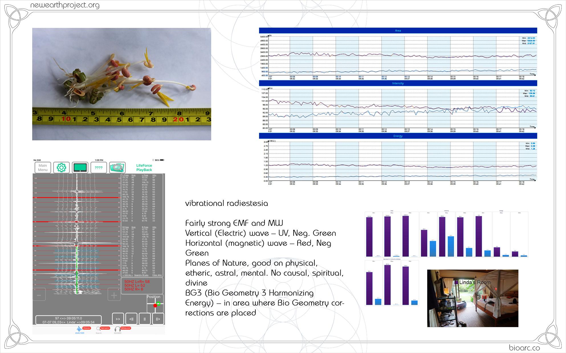 PRESENTATIONS seed 8.jpg