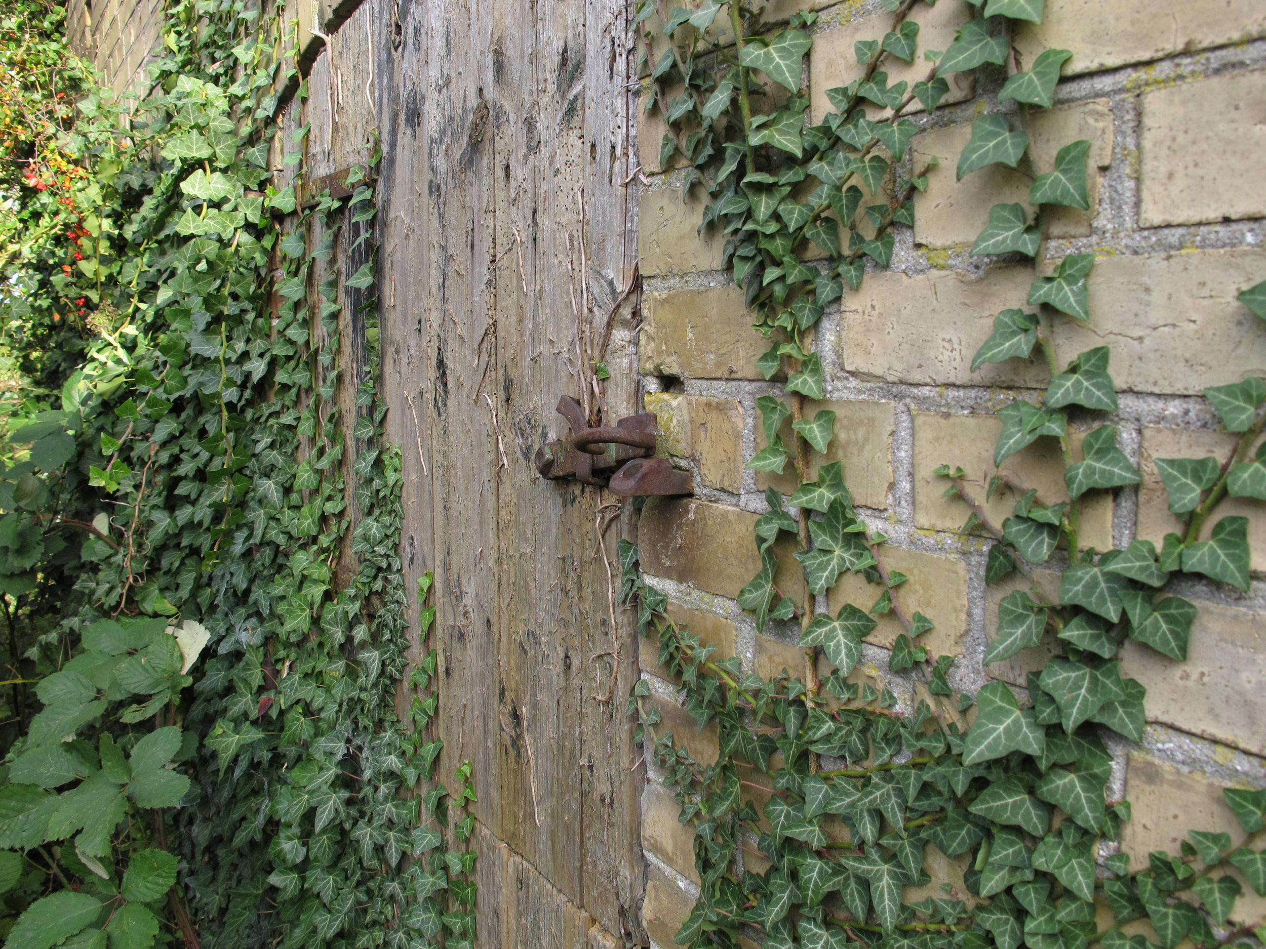 En af de lettere tilgroede døre til den gamle svinestald