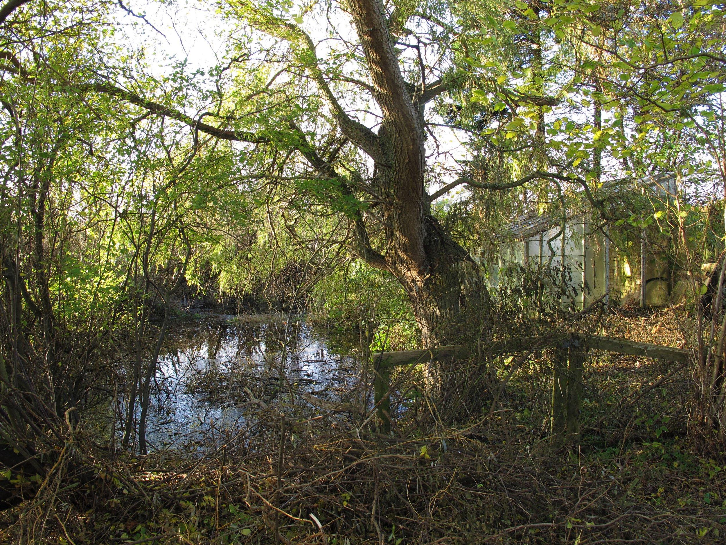 Søen, hængepilen og det forfaldne drivhus