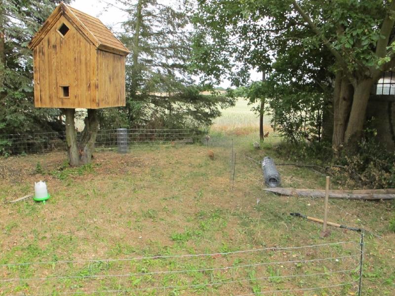 I baggrunden ses høns, der skider højt og flot på mit utilstrækkelige inderhegn og er ved at forlade matriklen.