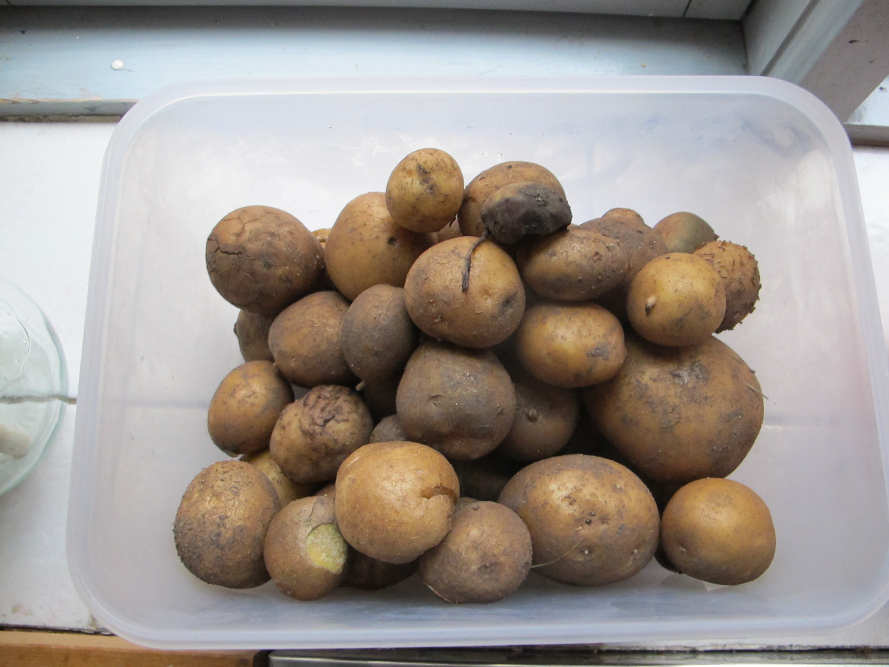 Så er der sørme egne kartofler igen. Netop som jeg var løbet tør. Tak, Berith!