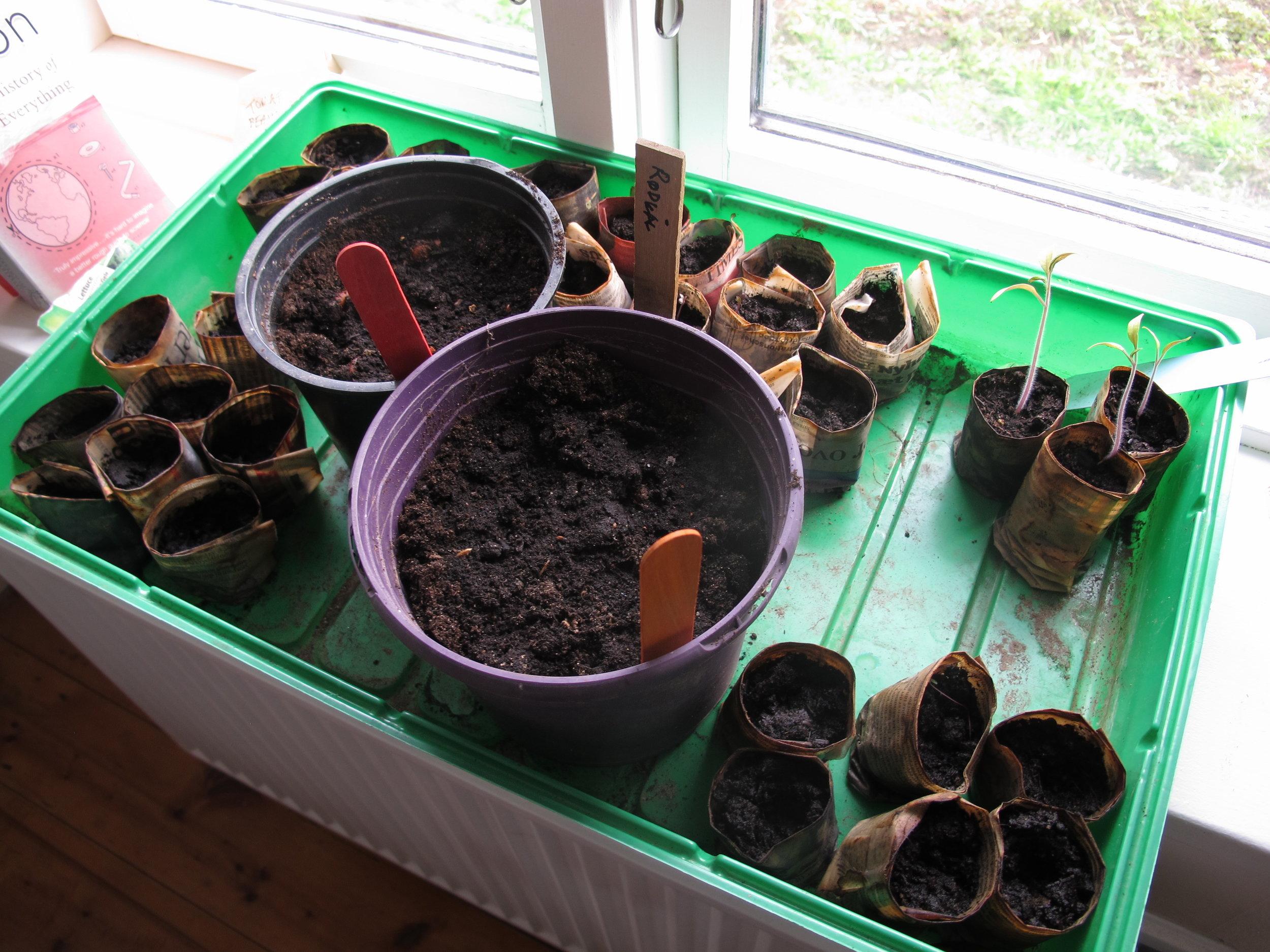 Her skulle der gerne snart komme små salat-, rødkål-, løg-, bønne- og græskarskud.