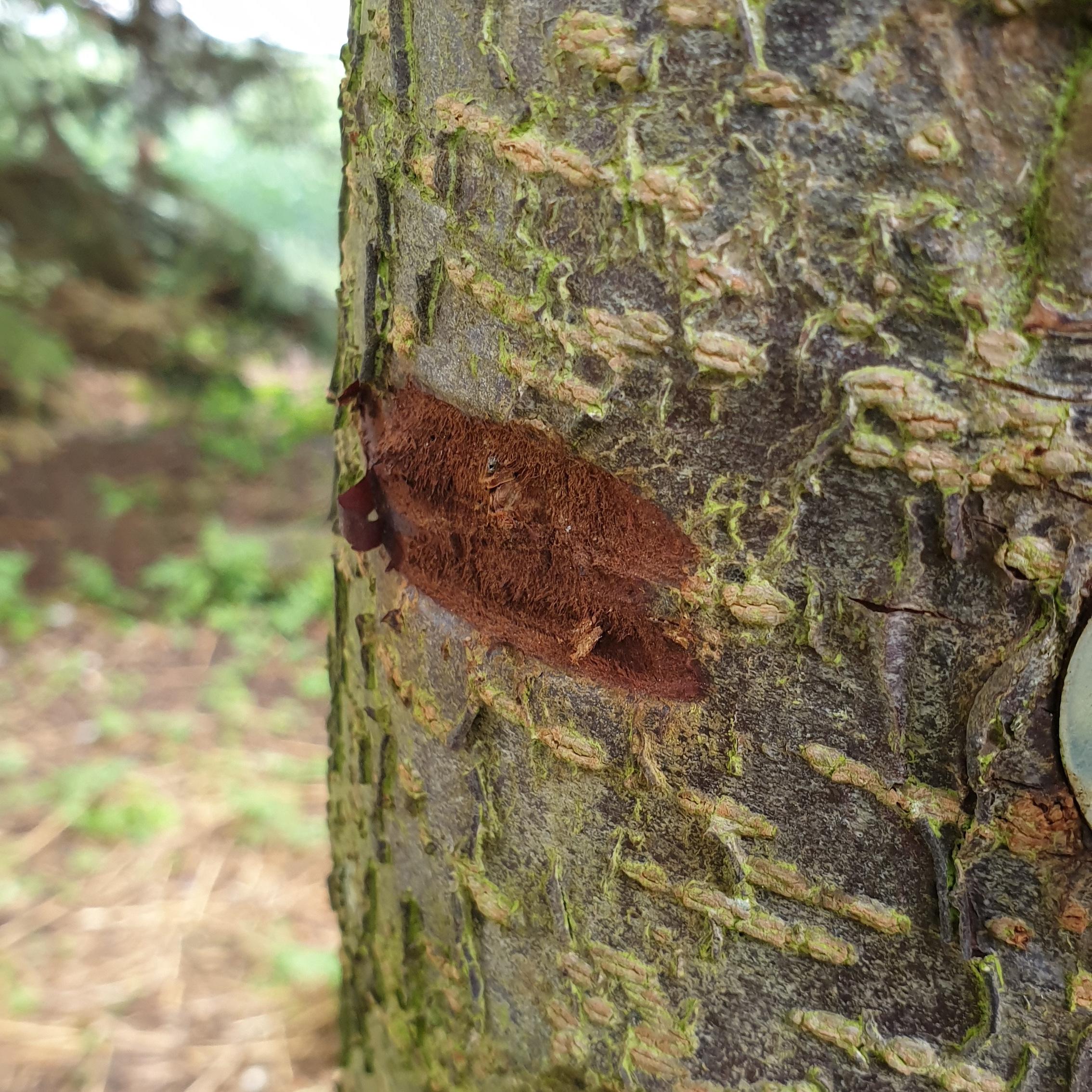 Er det her et kradsmærke fra ræven? Er han i så fald kravlet op ad stolpen?