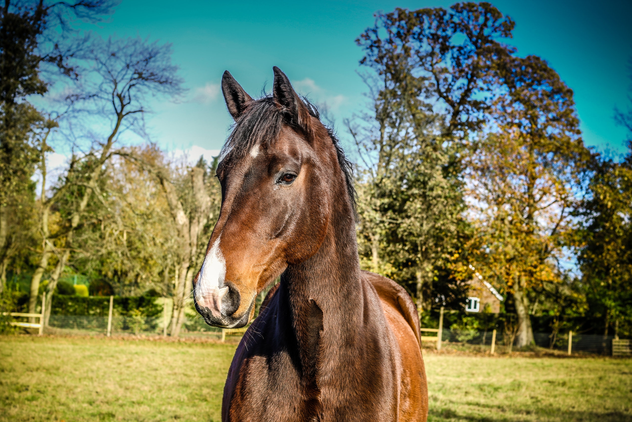 Specialist Equine osteopathic treatment