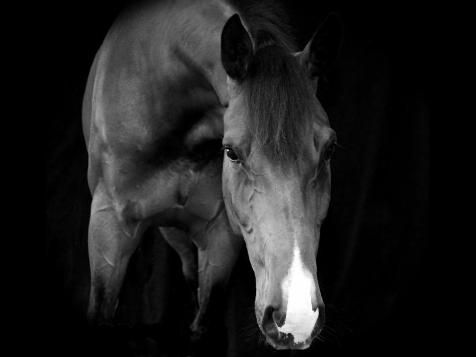 Equine osteopathic treatment prices
