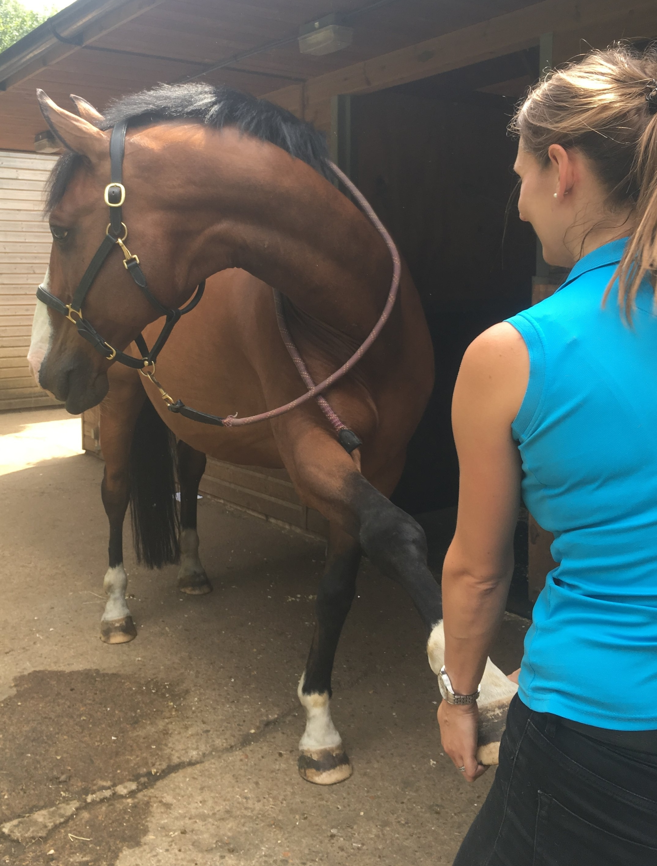 equine osteopathic stretch