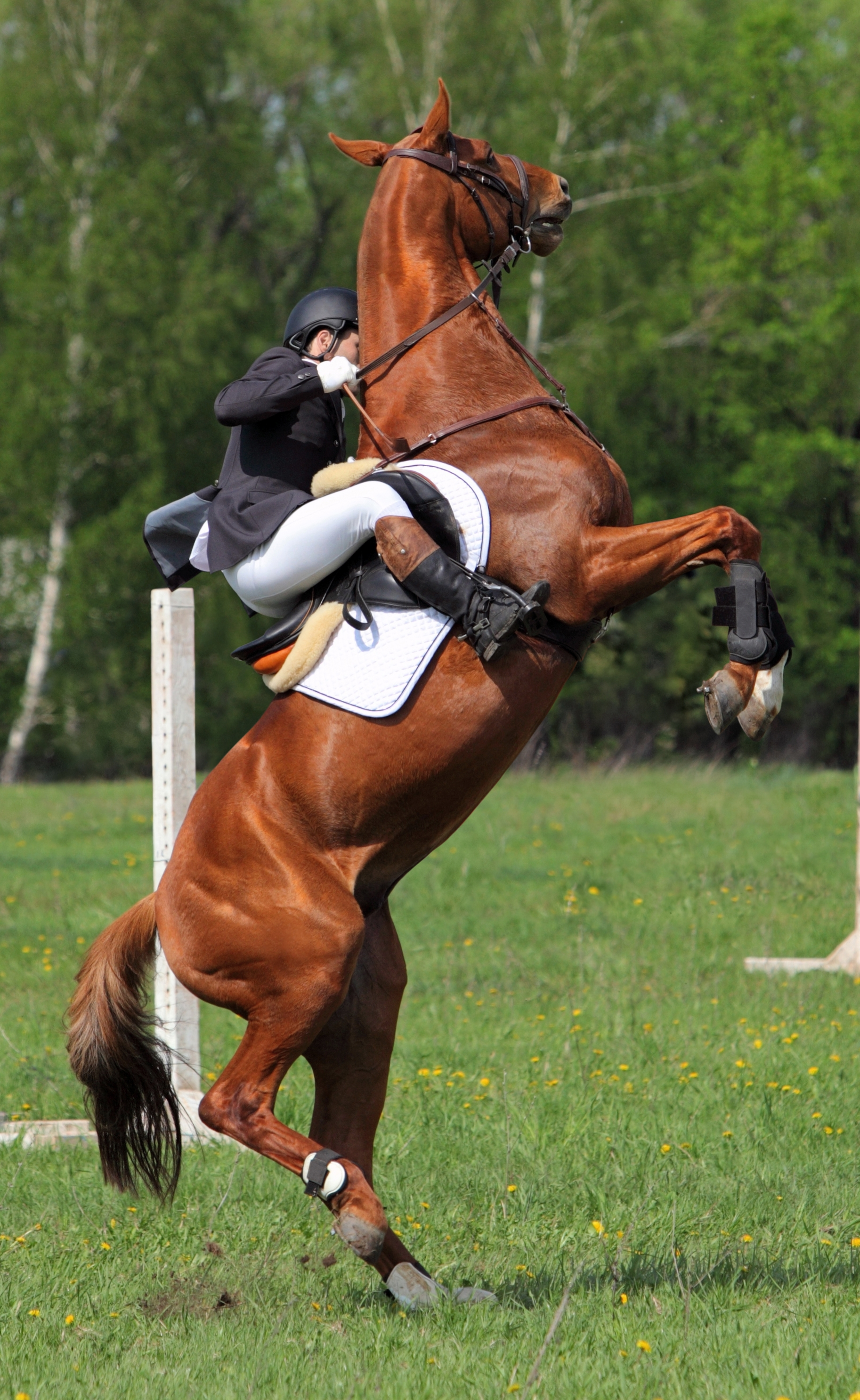 Signs of pain and discomfort in horses