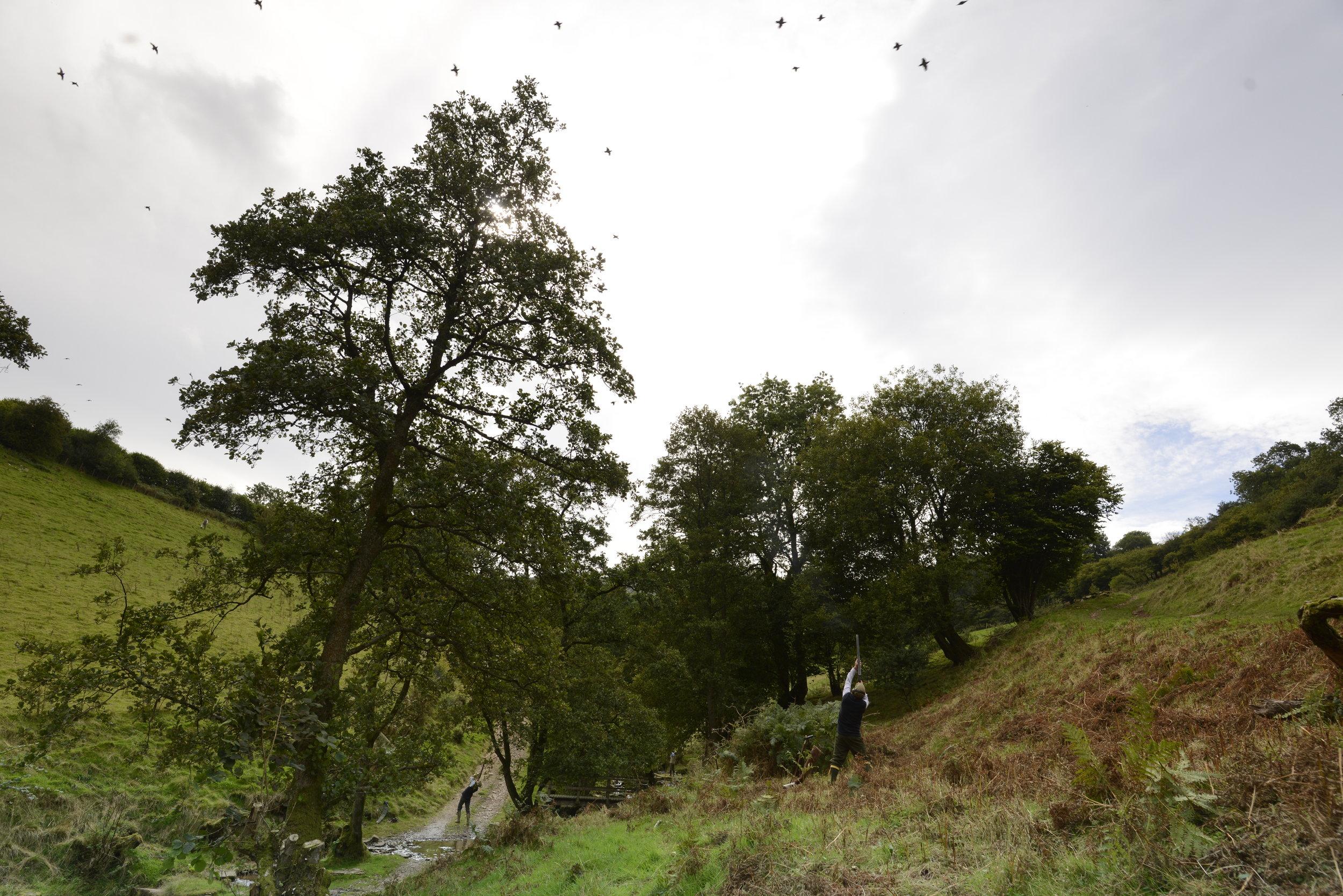 September partridge shooting - Tregoyd, Wales