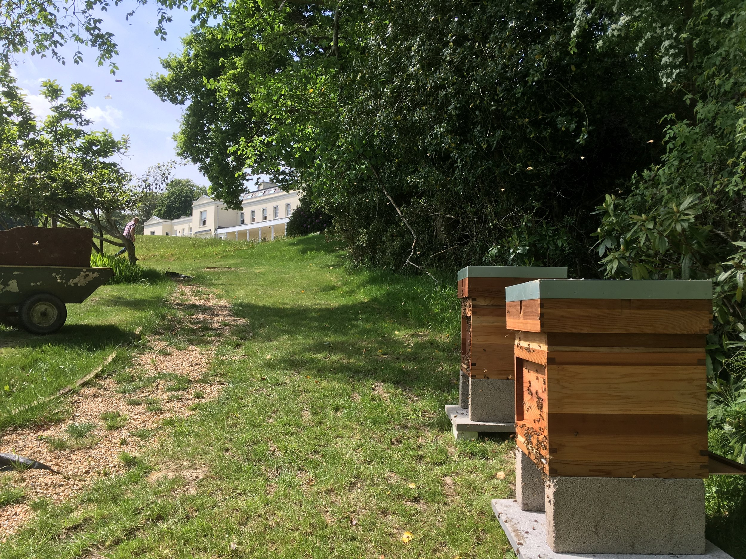 We look after beehives for residents at Northerwood House in The New Forest.