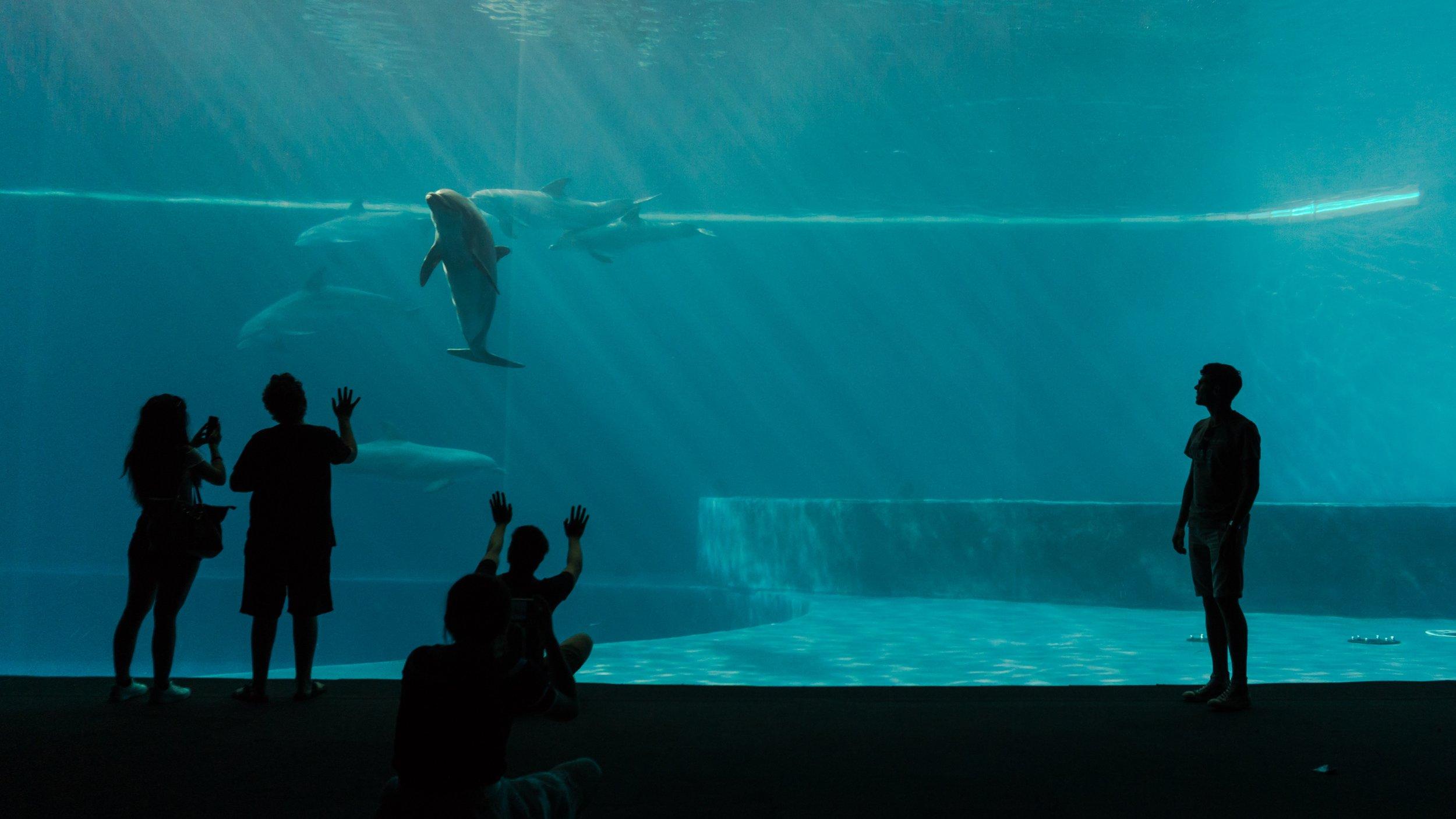 captive-dolphins