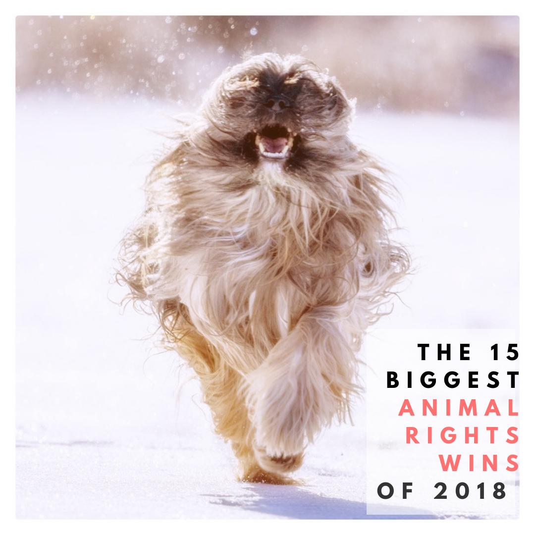 Animal Wins 2018.png