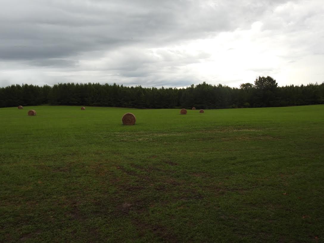 Hay Field.jpg