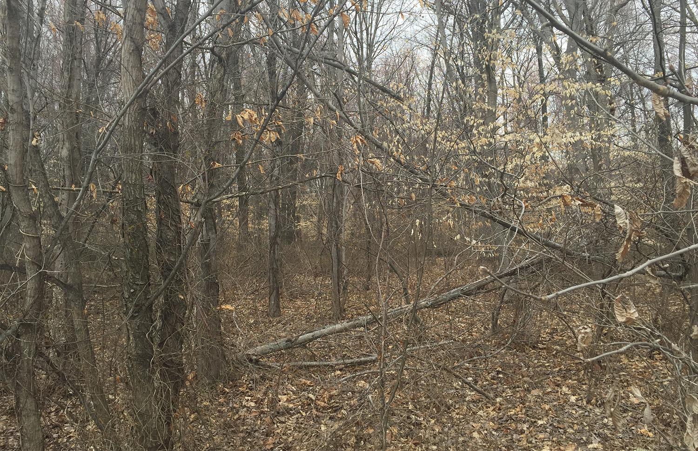 Existing woodlands