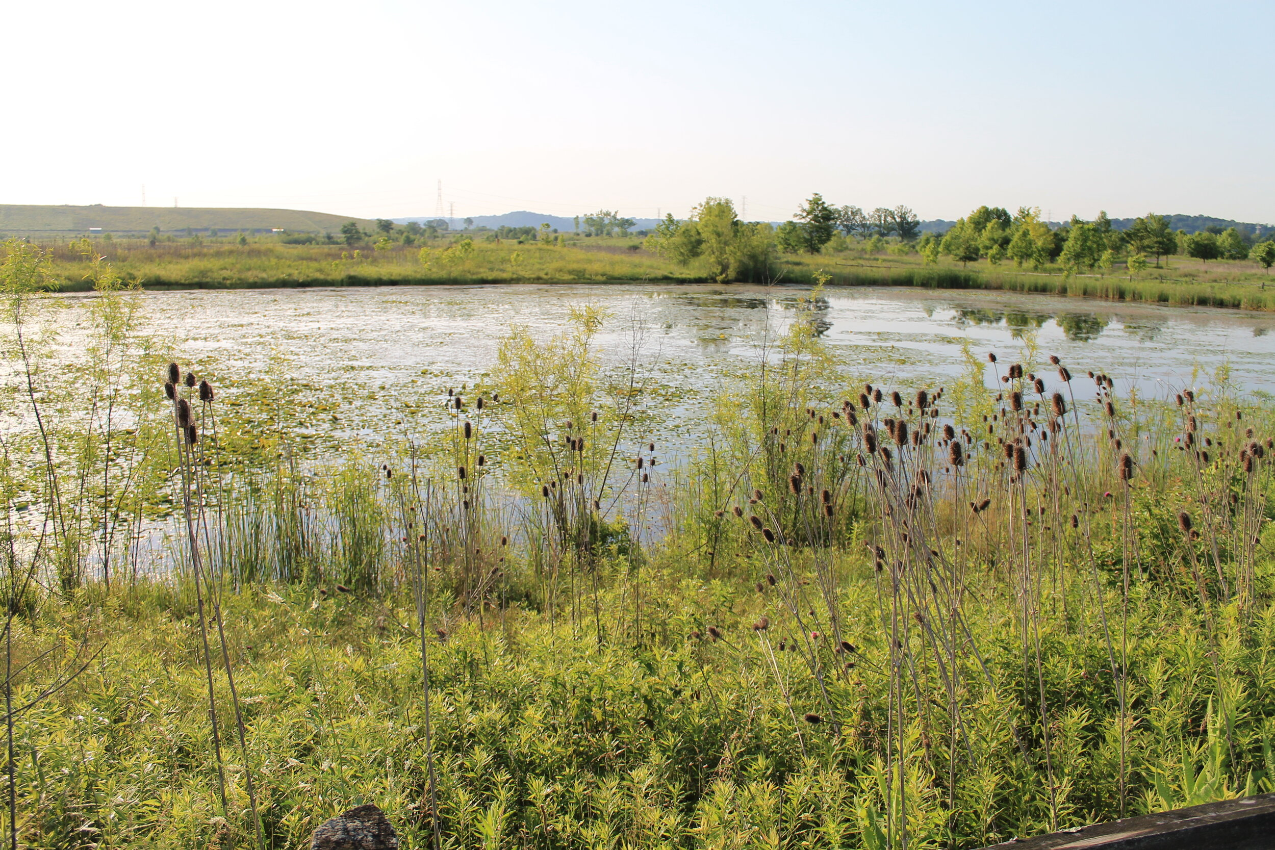 Figure 3: AFTER - A restored wetland that exists today where a facility building once stood