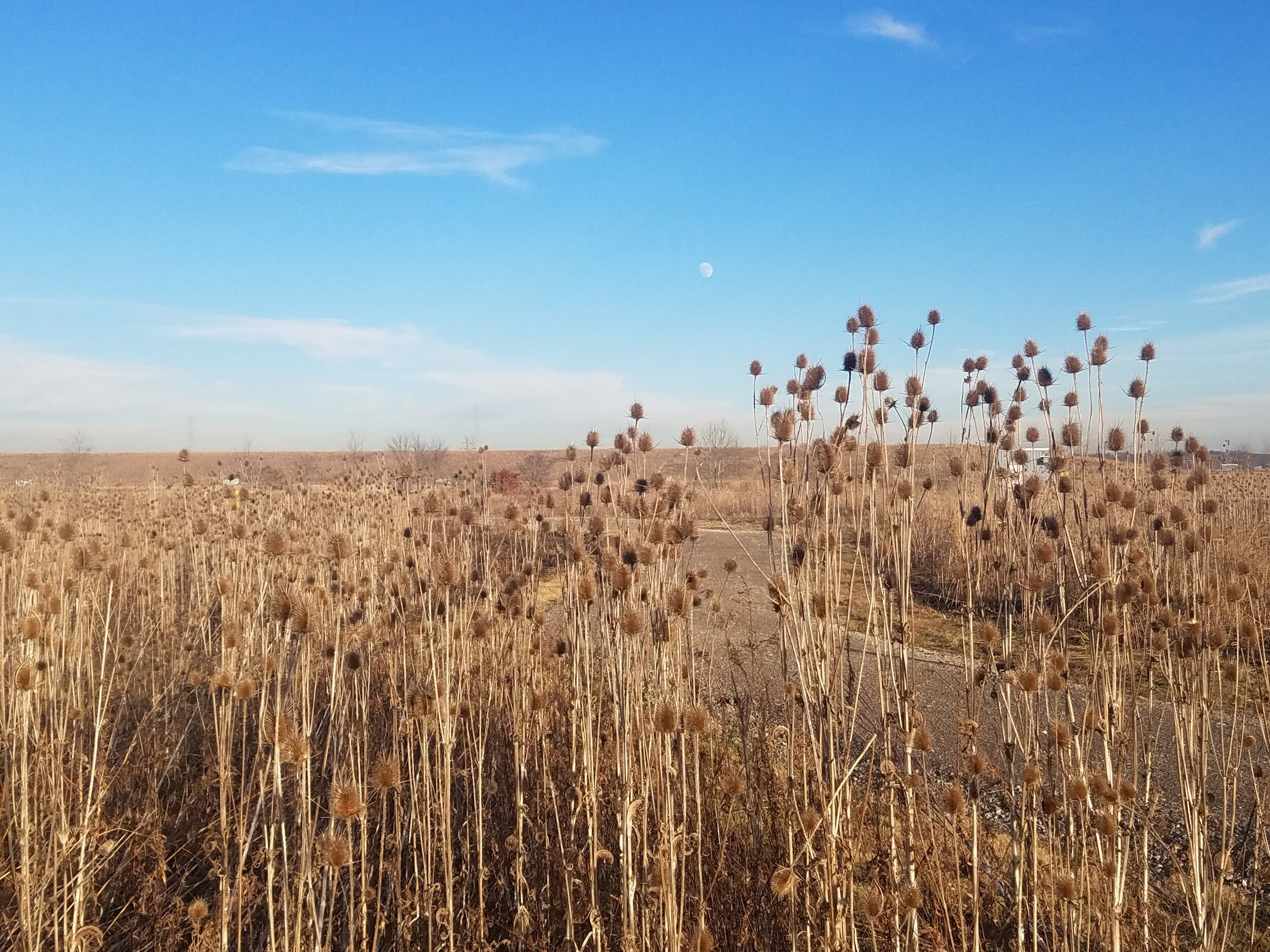 Figure 4: A prairie that has been burned as part of the on-going site and habitat management.