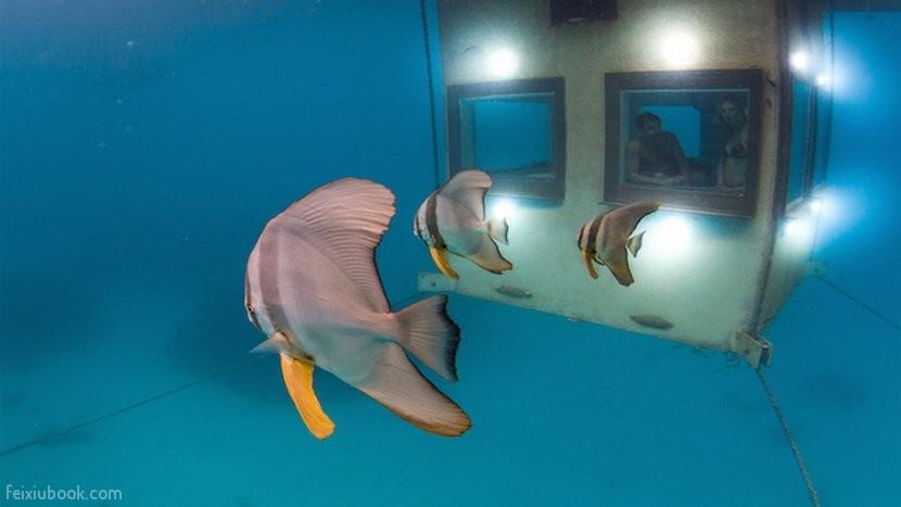 underwater exterior undersea batfish.jpg