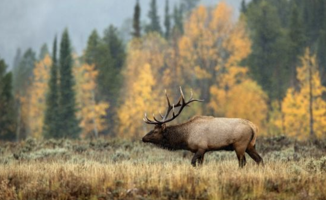 October 5: Grand Tetons Tour at Dusk - 3pm: Gather at a Teton Village resort to meet your tour group and guide. (details of which location are coming soon)This tour is four-hour and centered on wildlife observation.Grand Teton National Park encompasses 310,000 acres and is home to numerous large mammals. Elk, moose, mule deer, pronghorn, bison, bighorn sheep, bear, and wolves can all be seen within the park boundaries. Numerous species of birds including eagles, hawks, and owls can also be observed.This tour also focuses on the human and natural history of Grand Teton National Park as well as the diverse geology within the park.