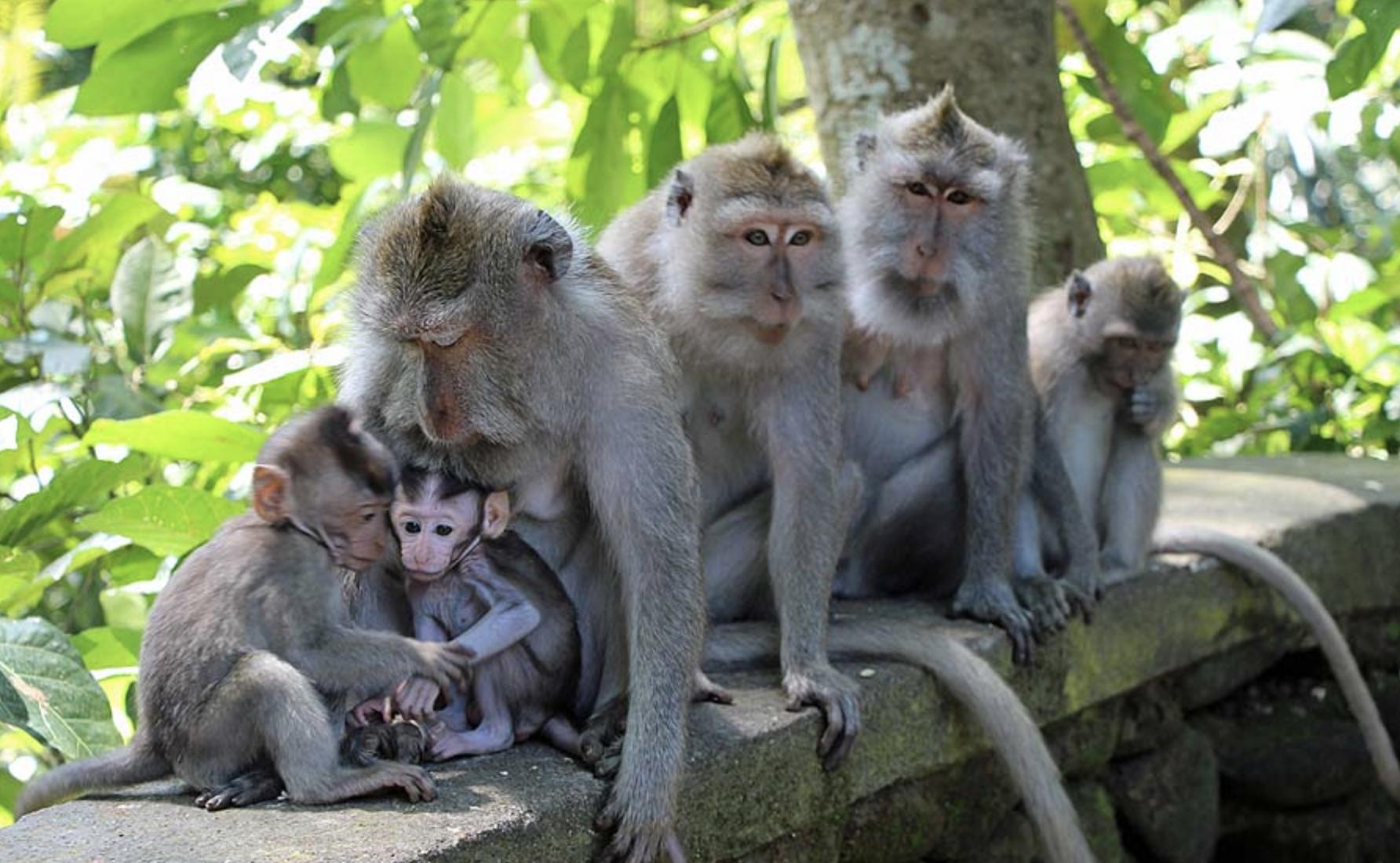 May 12: Ananda Meditation w/ Dada, Panca Mahabhuta w/ Pak Wayan, Monkey Forest -