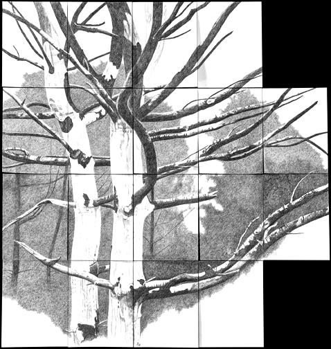 Donna Leavitt - Website My Piece of Earth BLOG9. 05. 17Washington