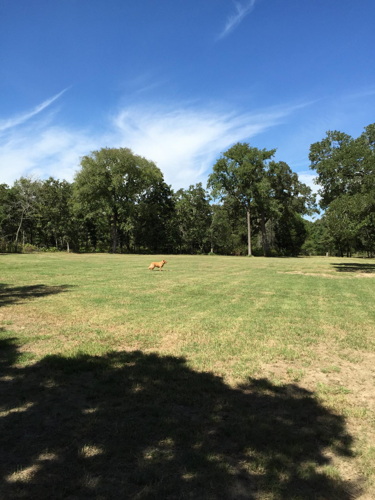 playing fields.jpg