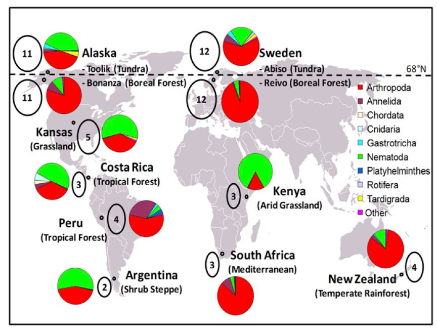 Global map of sampling locations and results of soil mesofauna distribution.