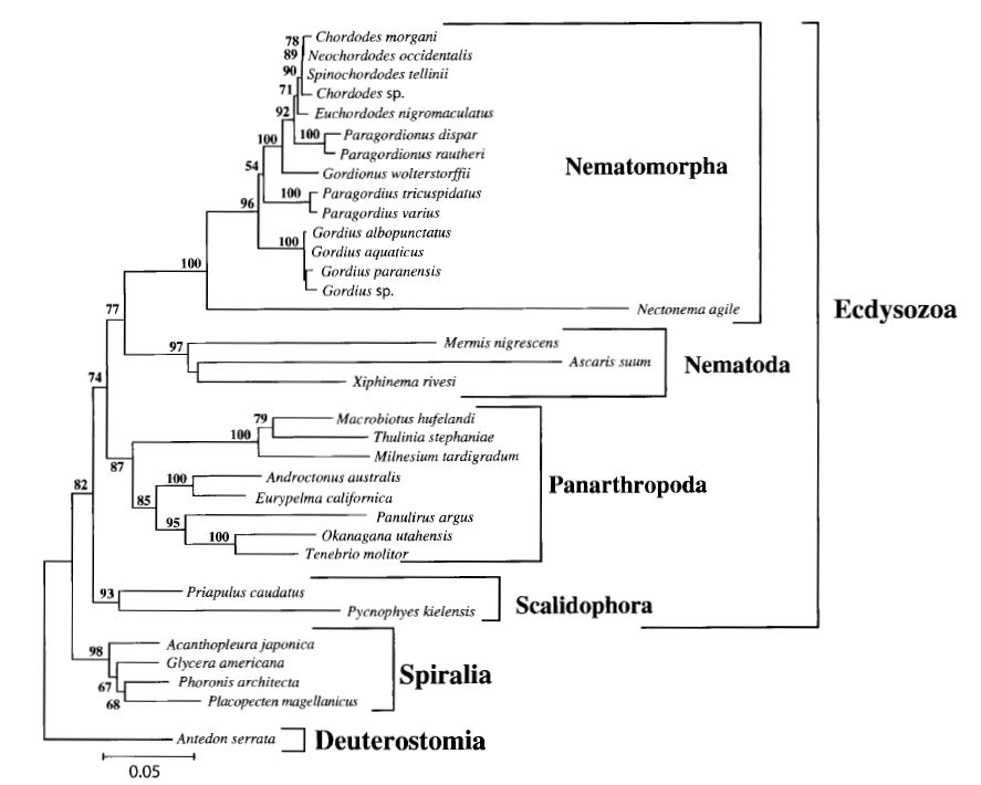 Phylogenetic tree showing the relationships of the phylum nematomorpha to ecdysozoa.