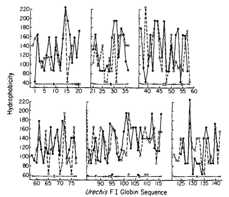hydrophobicity profiles of the amino acid sequence of hemoglobin from Urechis caupo.