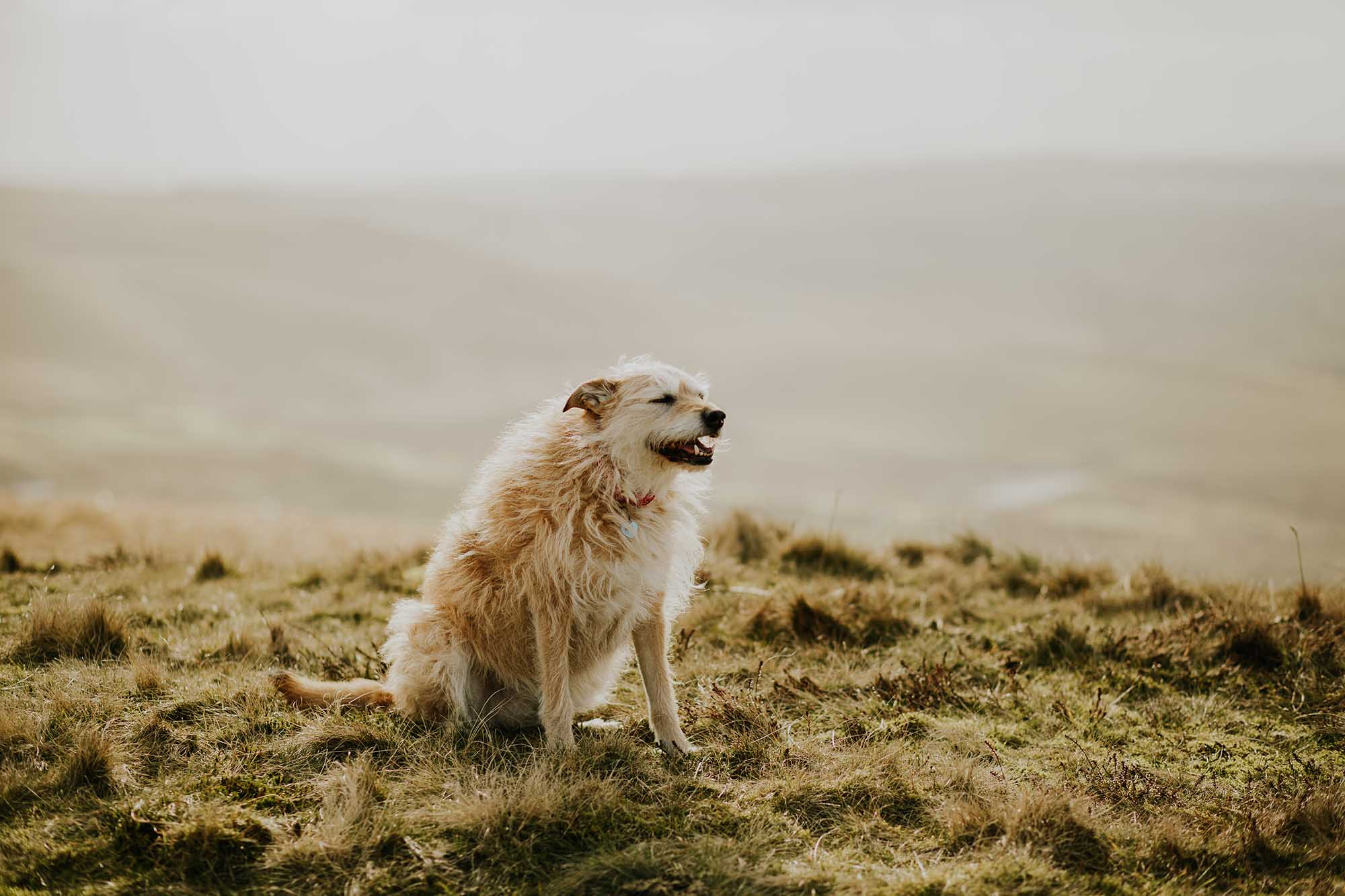 Dog on Blackstone Edge