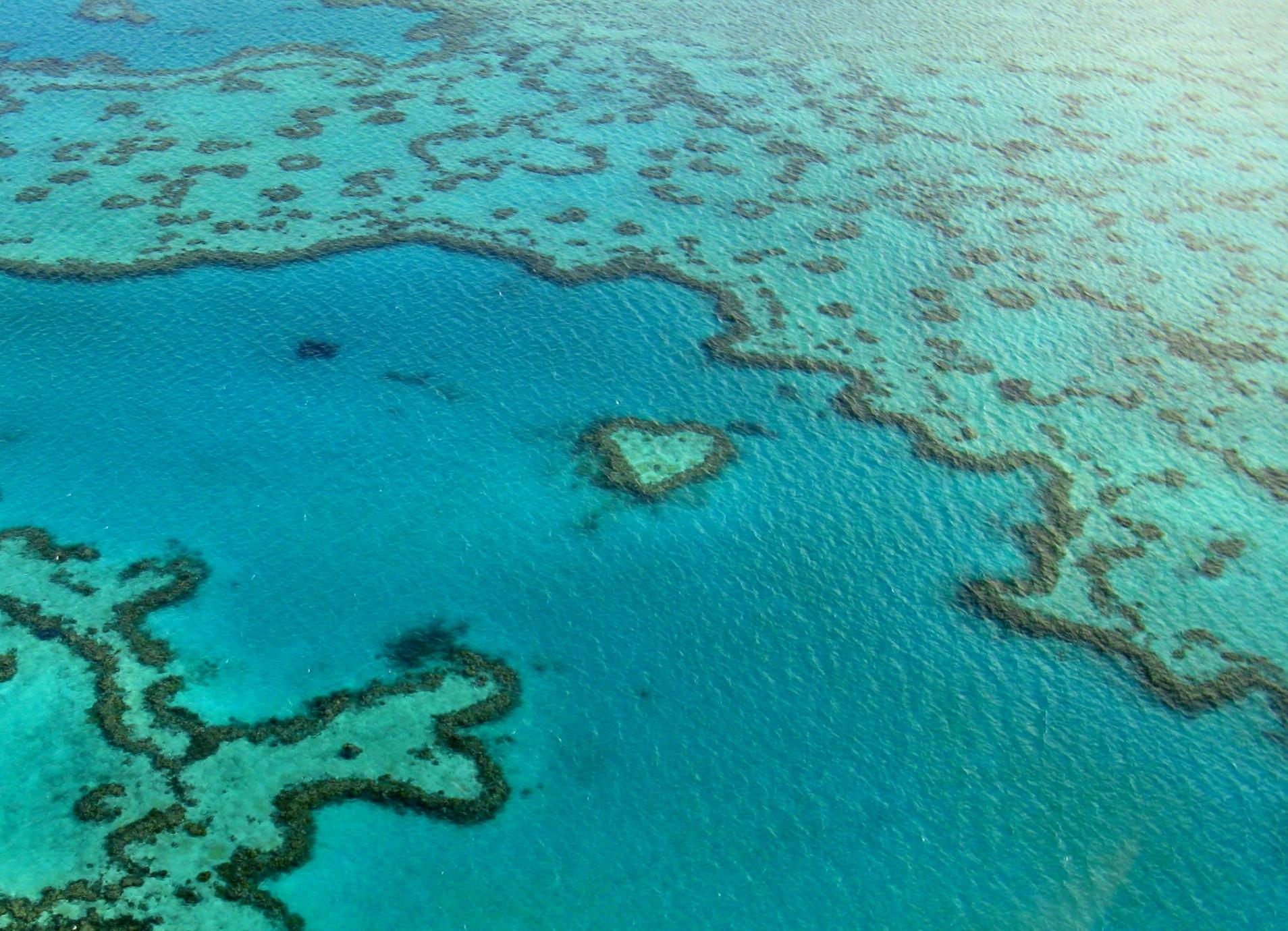 maria poole - Bolus_C_PL_265_Heart Reef[1].jpg