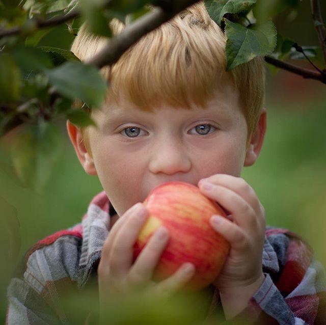 Hey little man! We're supposed to be picking apples not eating them. 😂 #ourcandidlife #dearest_viewfinder #scenesnotscreens #childofig #clickinmoms #dearphotographer #thefreespiritedchild #momswithcameras #illuminatechildhood #unscriptedchildhood #embracingeveryday #photogskid #jaxencole #letthekids #momtogs #documentaryphotographer #storytellingphotographer #motherhoodiscolorful #nothingisordinary #letthembelittle #thefocusedphotographer #littleandbrave #documentingmotherhood #reallifeisbeautiful #upstatenewyorkphotographer #childhoodunplugged #cameramama #lifewellcaptured #photogskid
