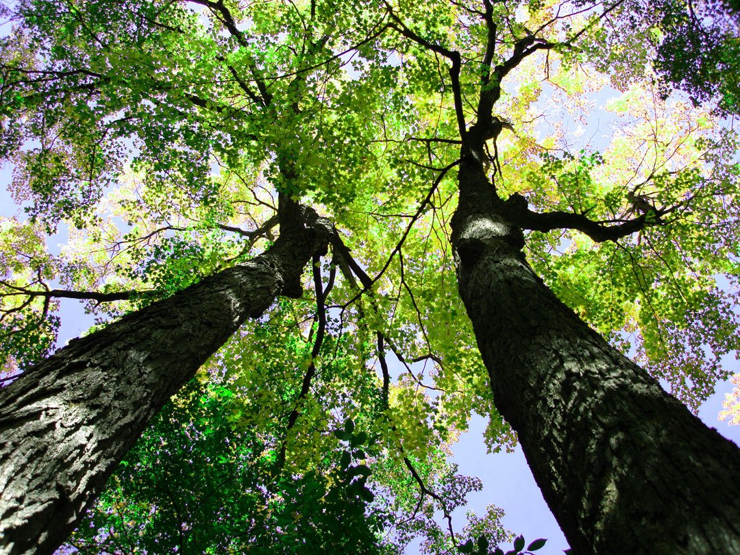 Servicing Those Ecosystems: The Value of Trees