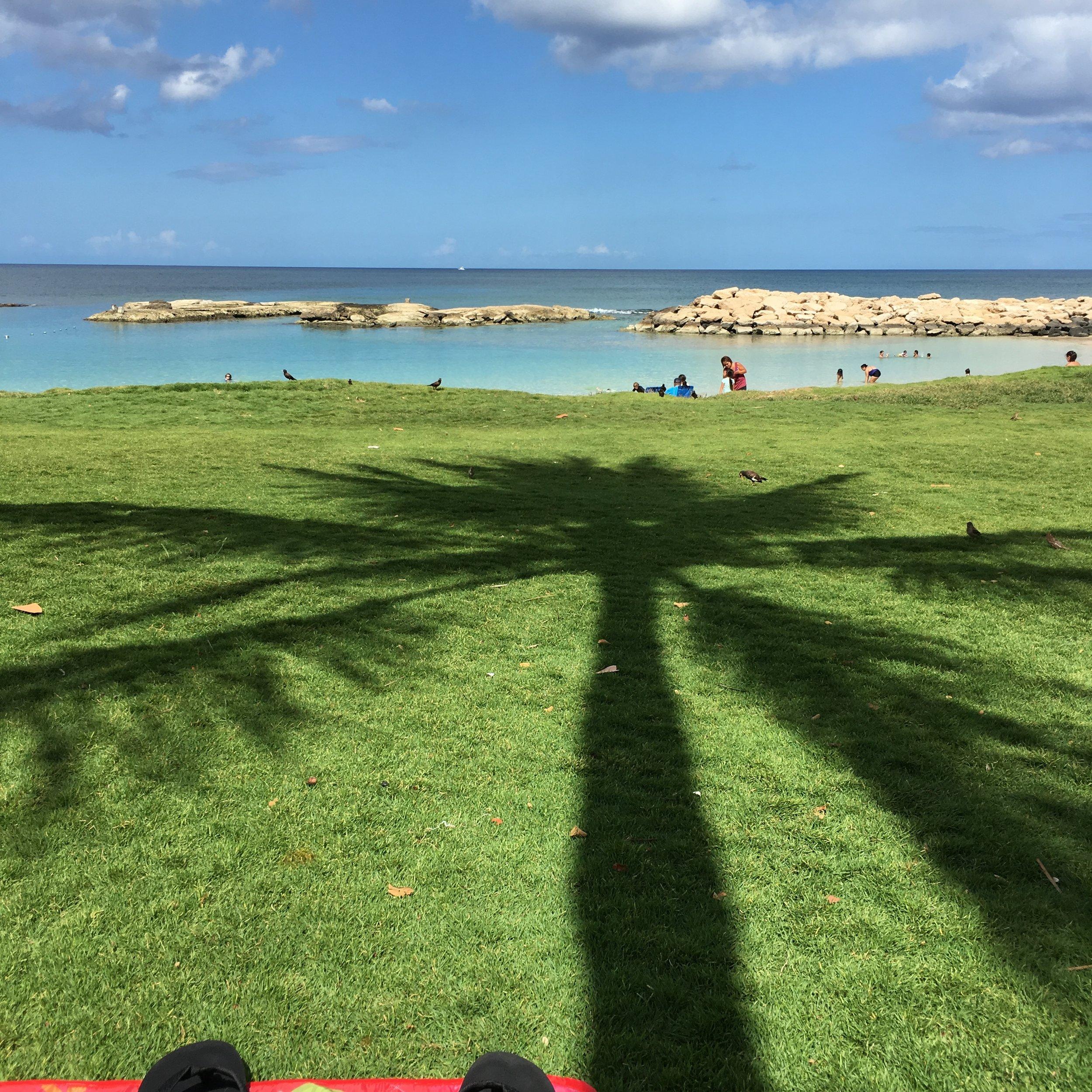 Beach, palm tree, ocean. ❣️