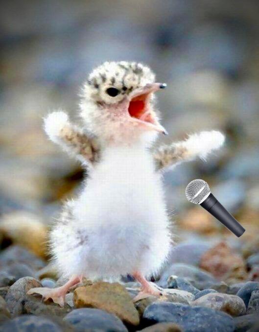 BirdMic.png