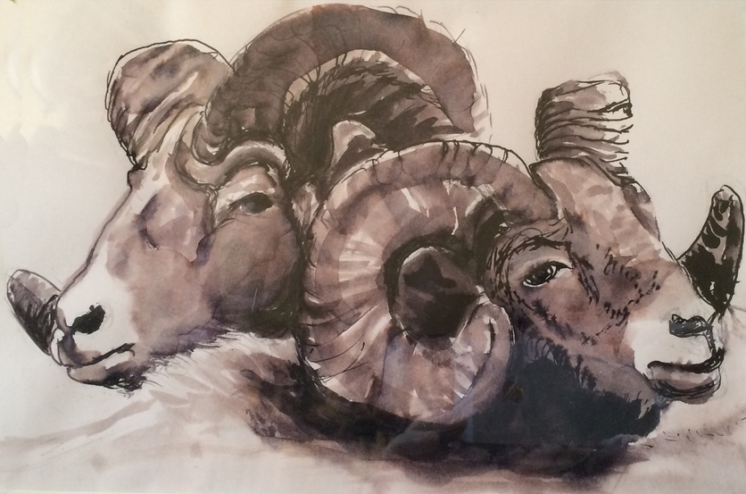 Big-Horn-Sheep-Loving-Pair-ink-sketch-by-Kathryn-Beam-Troxler --7592330_orig.jpg