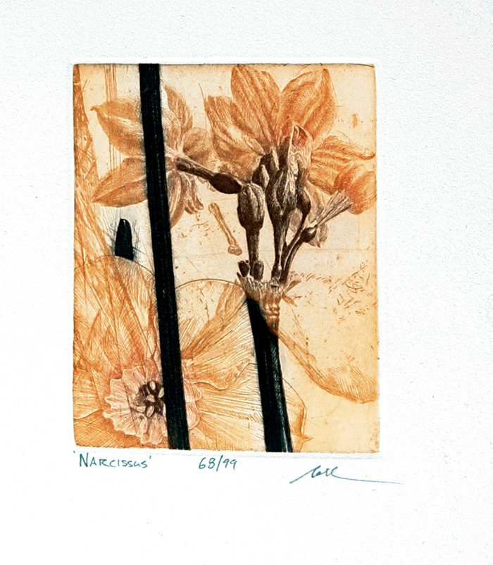 Narcissus (Small)
