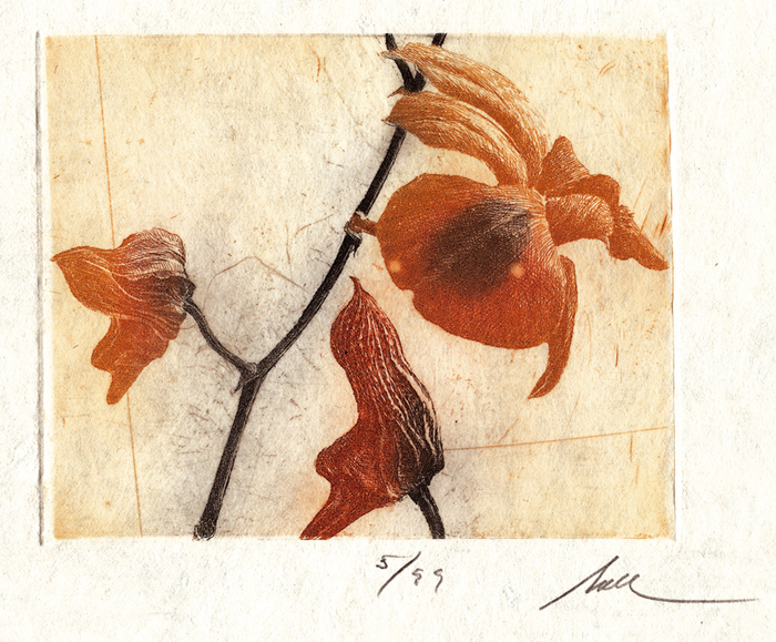 Orchid Branch (Small)