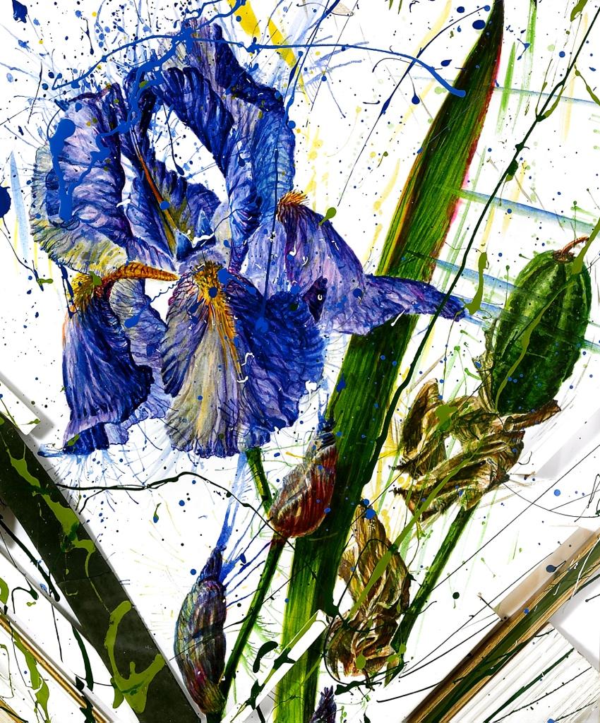 'Blue Iris'