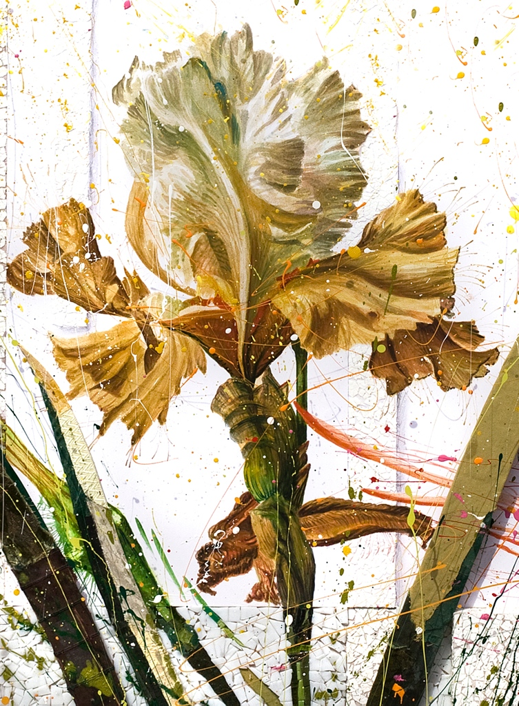 'Ocre Iris'