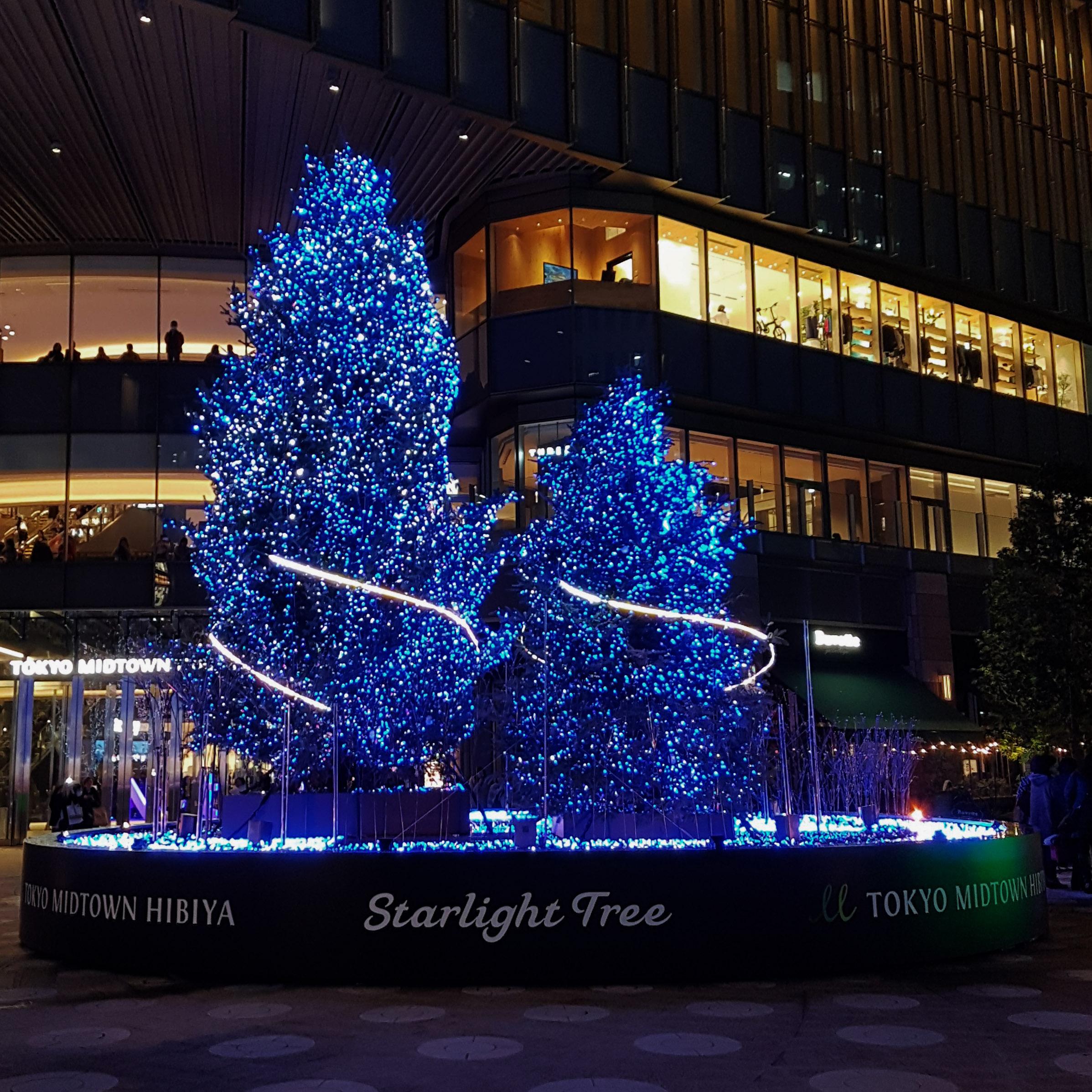 starlight tree winter illuminations