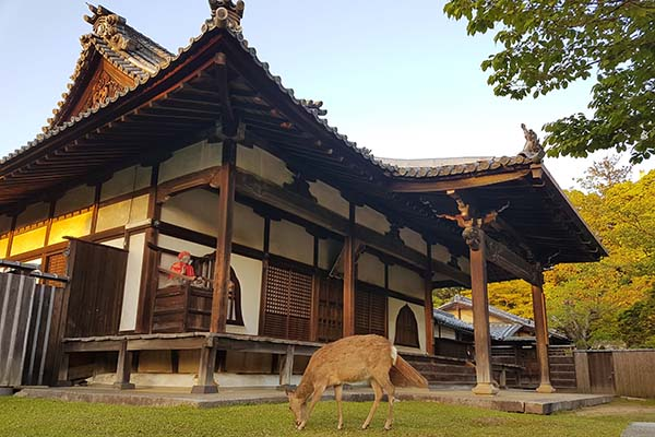 Deer can be found wandering around Nara Park. Image Source: Author's Own Image.