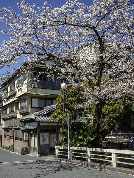 Location: HAKONE: KANAGAWA PREFECTURE, photo taken by author
