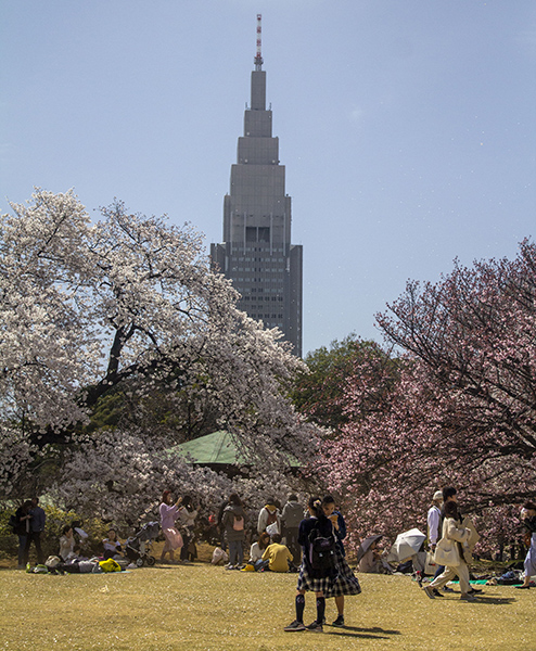 Location: SHINJUKU GYOEN NATIONAL GARDEN, photo taken by author