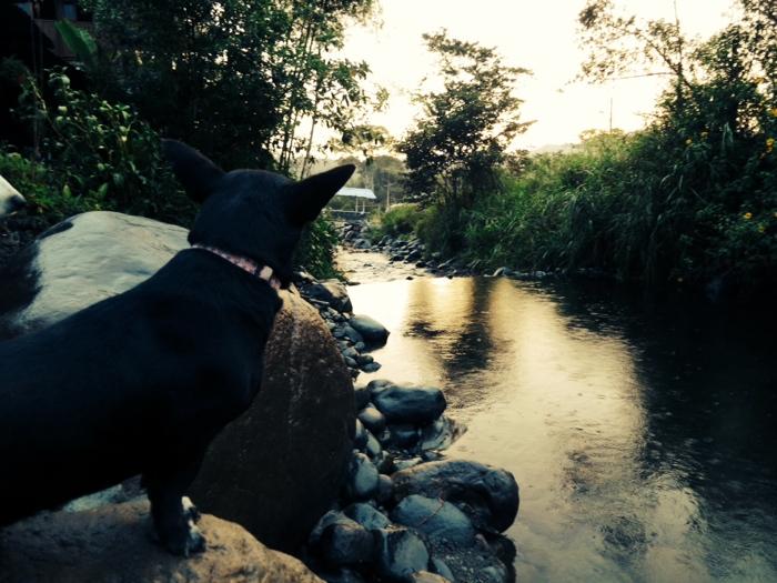 dogstream.jpg