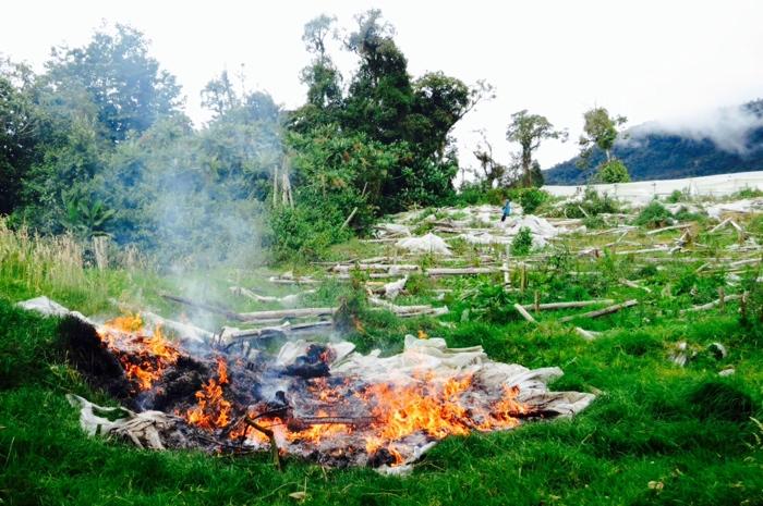 fieldfire.jpg