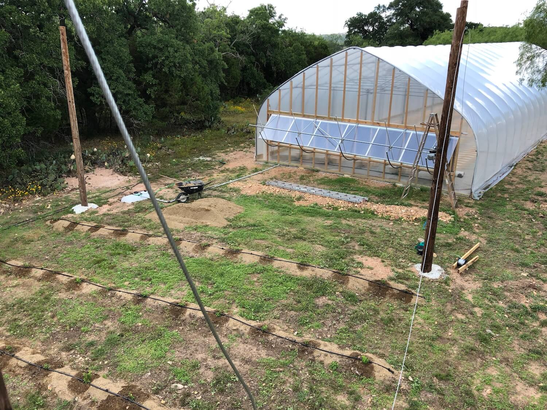 Texas hops, indoor and outdoor varietals