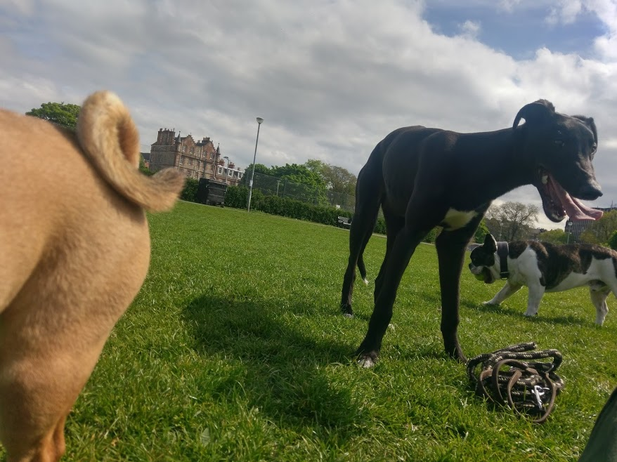 Enjoying time of the meadows with his pals