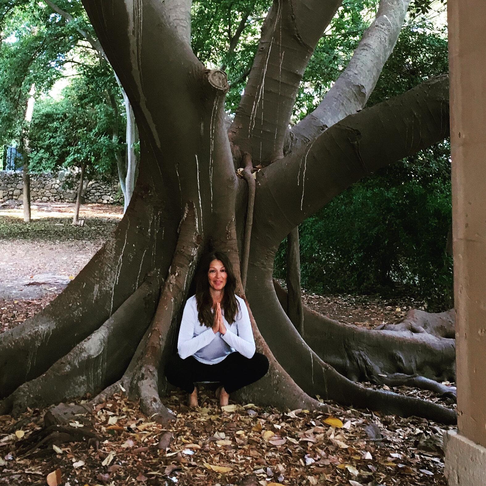 squat tree.JPG