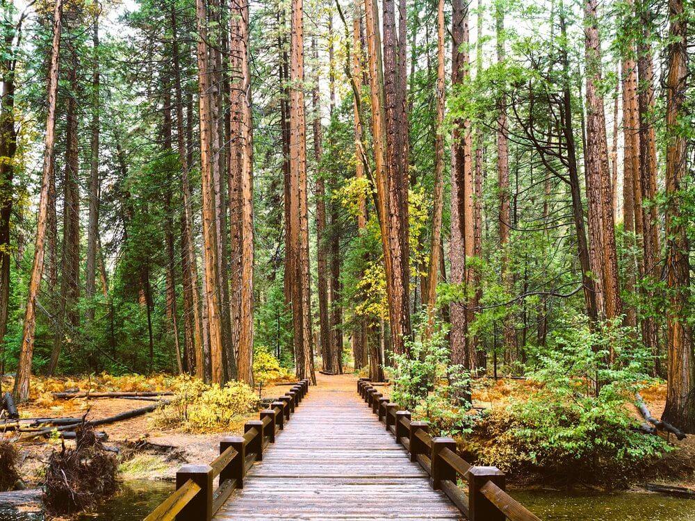 forest_hiking_northland_new_zealand_tekoha_te_ngaere_bay.jpg